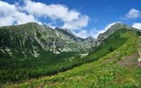 Spots of green on the rocky mountain wallpaper 2560x1600 jpg