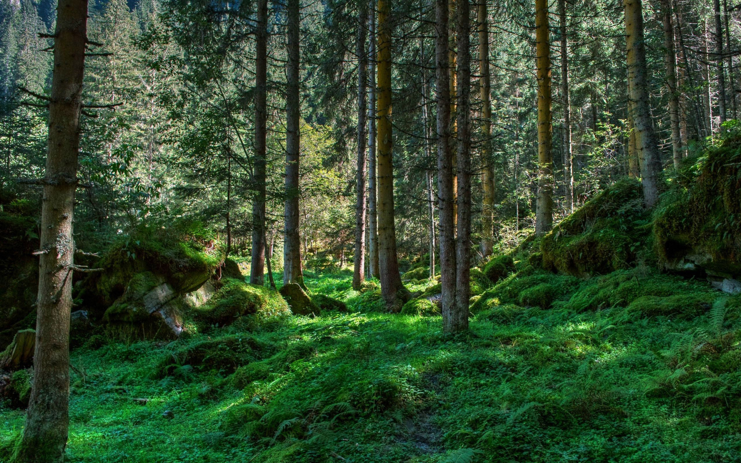 Spring forest wallpaper nature wallpapers 27222 for Forest wallpaper