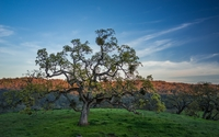 Spring tree on a green field wallpaper 2560x1440 jpg