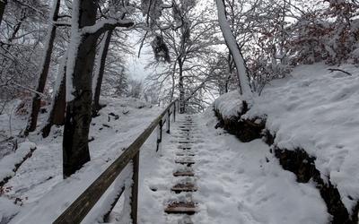 Stairway through the forest wallpaper