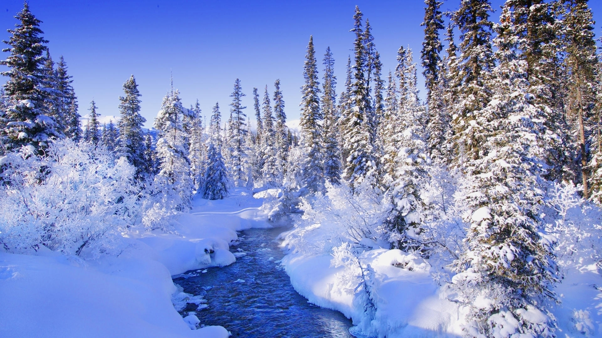 Winter Forest HD Wallpapers THIS Wallpaper