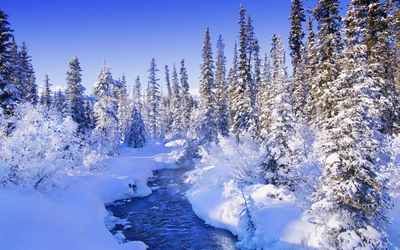 Steamy river by the snowy forest wallpaper