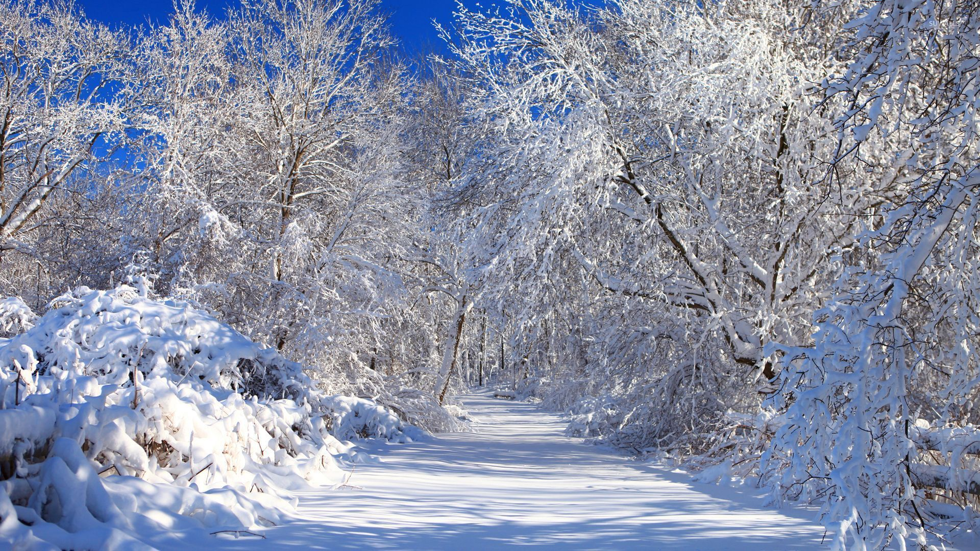 snowy nature wallpaper - photo #36