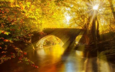 Stone bridge in an golden forest wallpaper