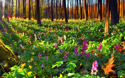 Summer flowers in the forest wallpaper