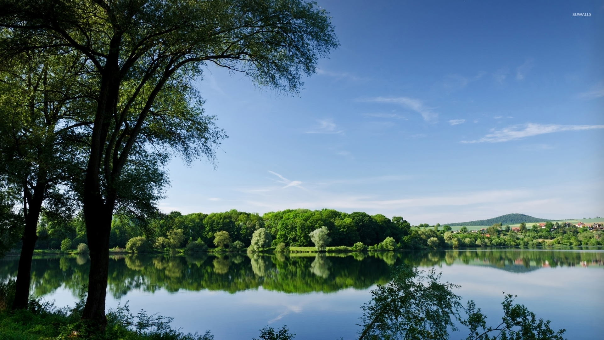 Summer forest by the lake wallpaper nature wallpapers for Summer lake
