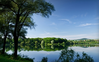 Summer forest by the lake wallpaper