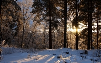 Sun hiding from the snow behind the trees wallpaper 1920x1080 jpg