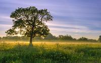 Sun light behind the tree wallpaper 2560x1600 jpg