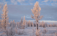 Sun light on top of the snowy trees wallpaper 3840x2160 jpg
