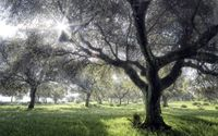 Sun light reaching trough tree branches wallpaper 1920x1200 jpg