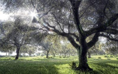 Sun light reaching trough tree branches wallpaper