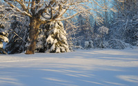 Sun light reflecting on the snow wallpaper 1920x1200 jpg
