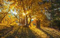 Sun light through the trees wallpaper 1920x1200 jpg
