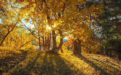 Sun light through the trees wallpaper