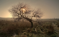 Sun shining from behind the lonesome tree wallpaper 1920x1200 jpg