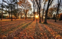 Sun shining through the autumn forest wallpaper 2560x1600 jpg
