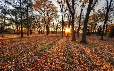 Sun shining through the autumn forest wallpaper