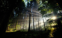 Sun shining through the forest wallpaper 1920x1200 jpg