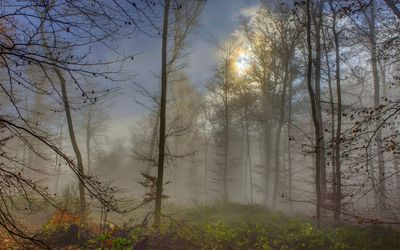 Sun shining upon the foggy forest wallpaper