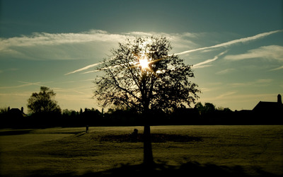 Sun through the trees branches wallpaper