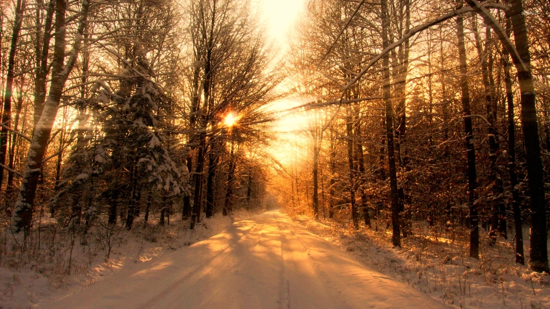 Sun Warming The Snowy Forest Wallpaper Nature Wallpapers