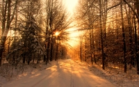 Sun warming the snowy forest wallpaper 1920x1080 jpg