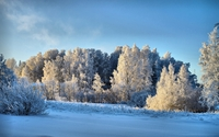 Sunlight on the snowy trees wallpaper 2560x1600 jpg