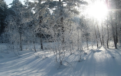 Sunlight over the snowy forest wallpaper