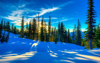 Sunlight reflecting in the snow wallpaper 2560x1600 jpg