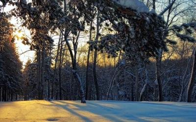Sunlight through the snowy forest wallpaper
