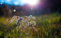 Sunlit grass wallpaper 2560x1440 jpg