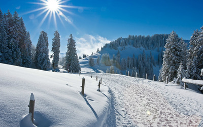 Sunny winter wallpaper