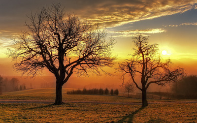 Sunset above the winter trees Wallpaper