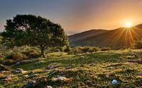 Sunset from the hilltop tree wallpaper 1920x1200 jpg