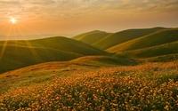 Sunset light shining upon the golden flowers wallpaper 1920x1080 jpg