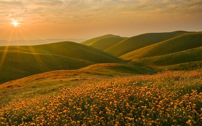 Sunset light shining upon the golden flowers wallpaper