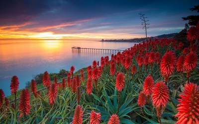 Sunset over exotic flowers wallpaper