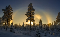 Sunset over the snowy forest wallpaper 1920x1200 jpg