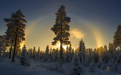 Sunset over the snowy forest Wallpaper