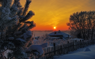 Sunset over the snowy trees wallpaper