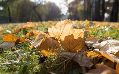 Sunshine over the dry leaves wallpaper