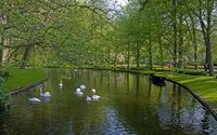 Swans in the park wallpaper 2560x1600 jpg