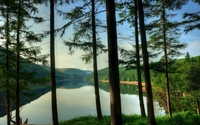 Tall trees by the lake wallpaper 1920x1200 jpg