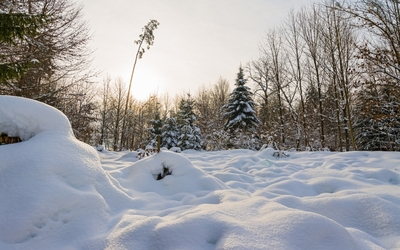 Thick snow in the forest wallpaper