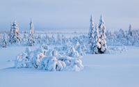 Thick snow on the trees wallpaper 1920x1200 jpg