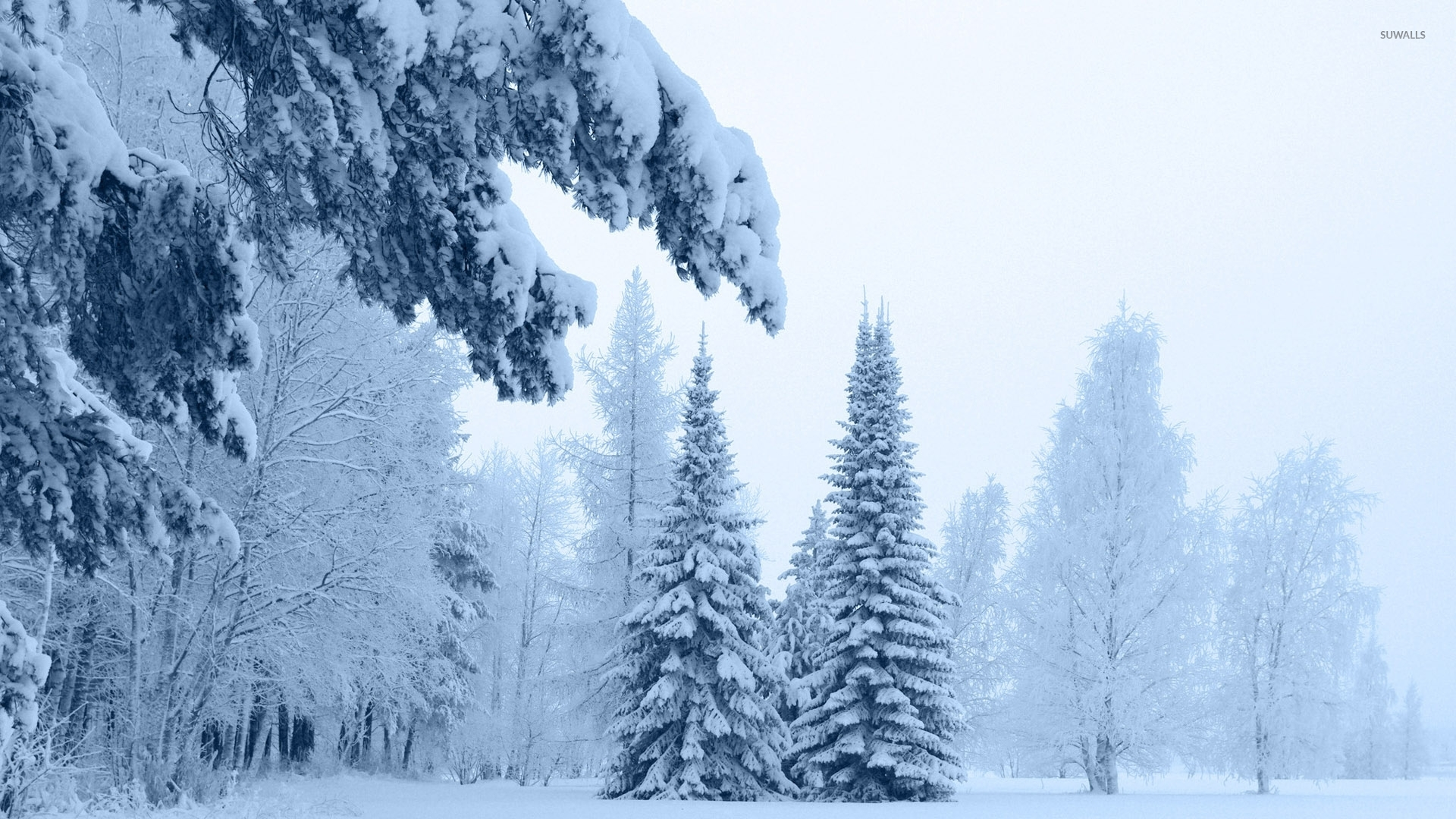 pin snow wallpapers trees - photo #39
