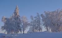 Thick snow on trees [2] wallpaper 2880x1800 jpg