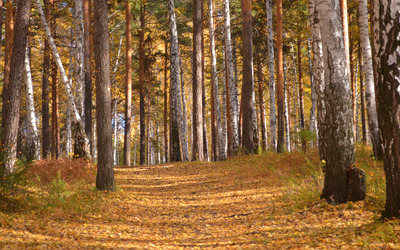 Trail of autumn leaves in the forest wallpaper