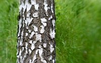 Tree bark [6] wallpaper 2560x1600 jpg